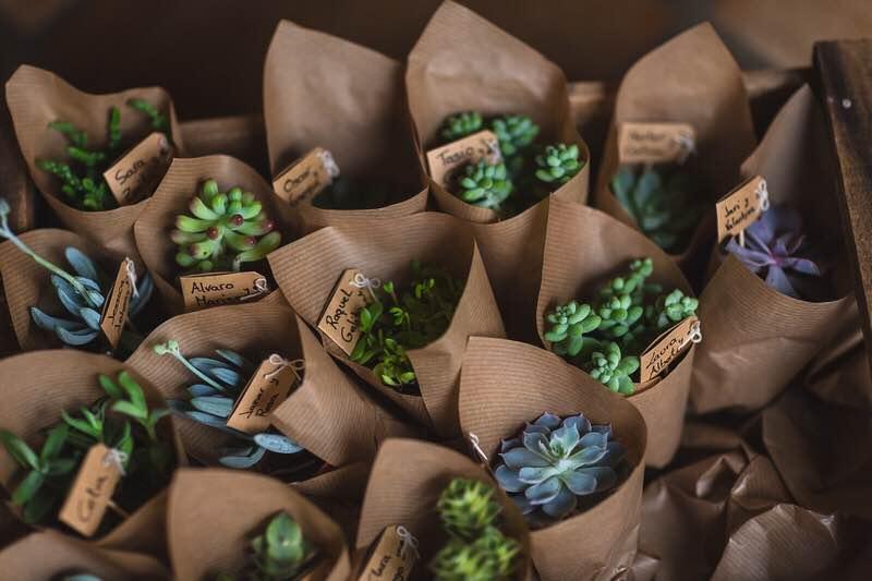 Plantas envueltas para regalo